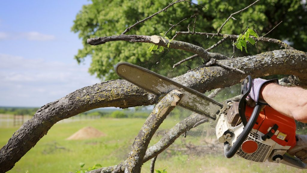 Tree Removal Saint Louis MO